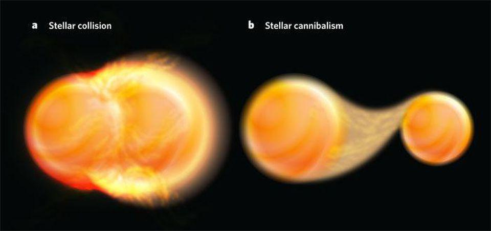 Brown dwarfs can form full-fledged stars either by collisions or accretion.