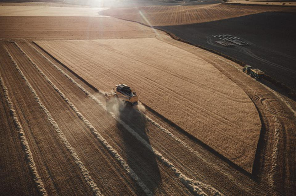 Combine  harvester working at sunset from aerial view.