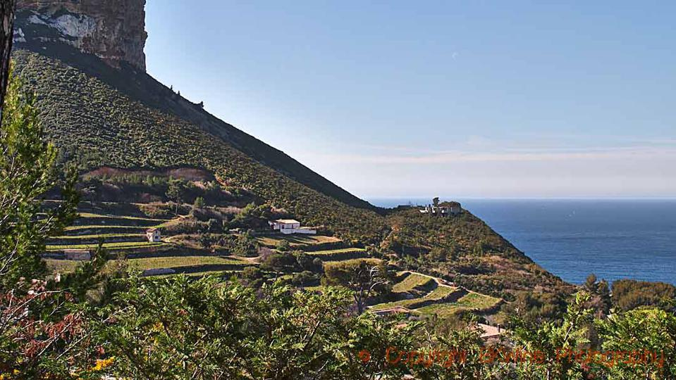 Vineyards on steep slopes overlooking the Mediterranean, near the Cassis village, Provence