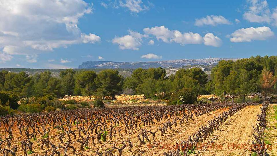 Vineyards, pine forests and mountains in Provence