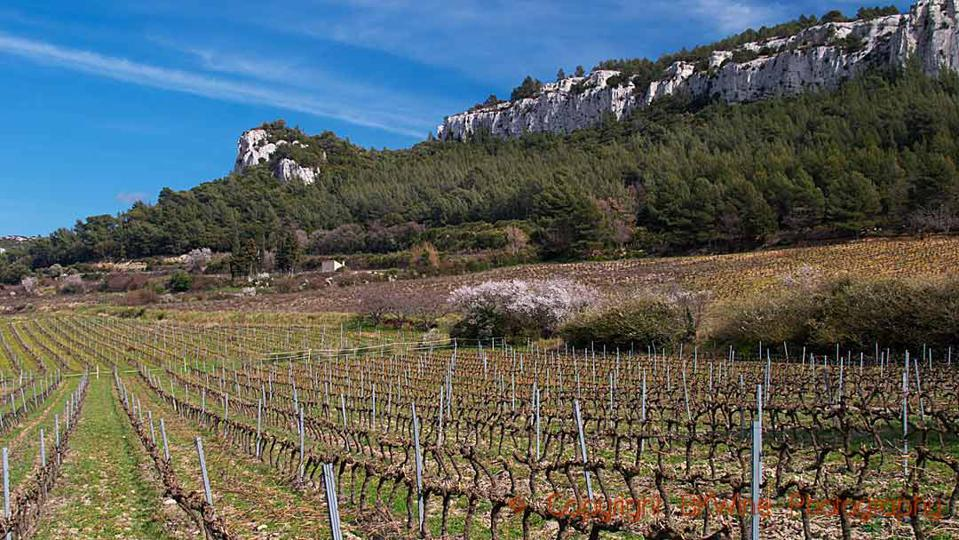 Vineyards of Provence in winter and limestone rock formations