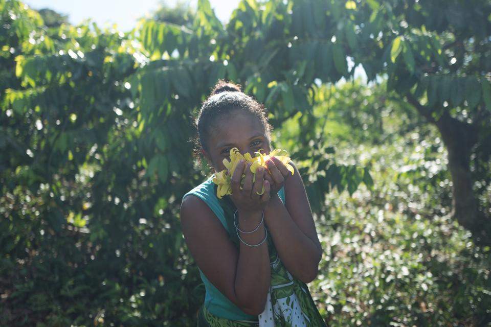 Ylang ylang harvest, Nosy Bé, Madagascar