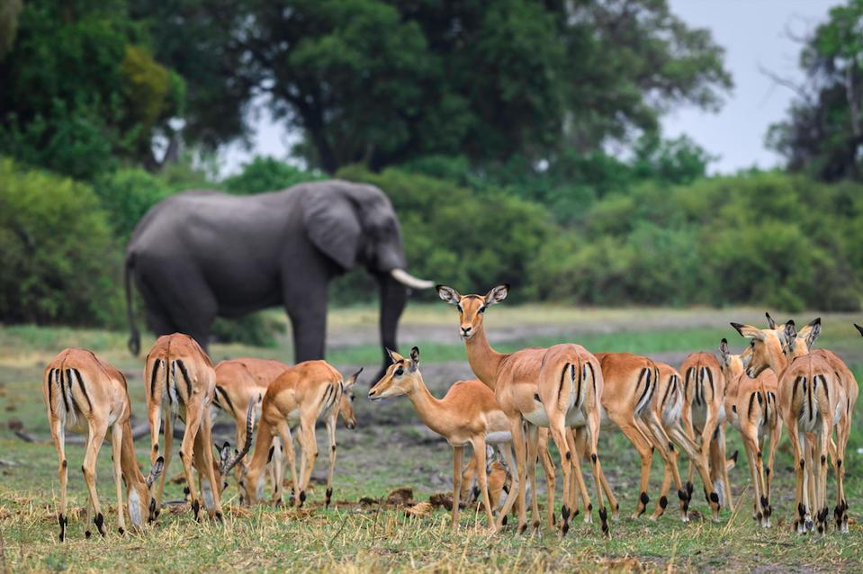 In search of Botswana's wildlife with Wilderness Safaris.
