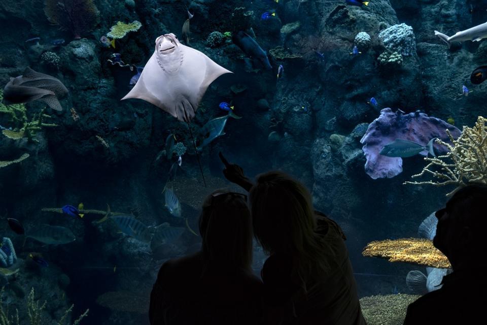 The Aquarium of the Pacific in Long Beach