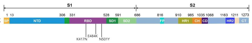 Figure 1. Linear representation of the spike protein with mutations N501Y, K417N, and E484K.