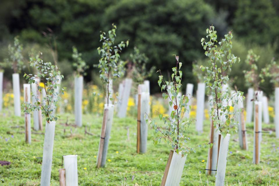 Sand Martin Wood in Faugh near Carlisle, Cumbria, UK, was acquired by the carbon offset company co2balance in September 2006. It has been planted with a broad mix of native trees over 6 hectares and is managed for wildlife as well as the companies offset