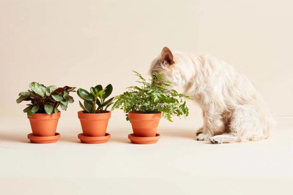A dog sniffing plants