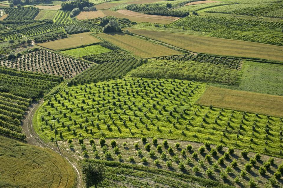 Vineyards in Roero, Piedmont, Italy