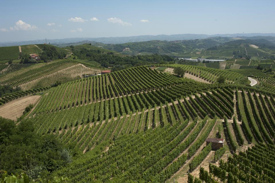 Wines of Tenuta Fratelli Povero, Roero, Italy