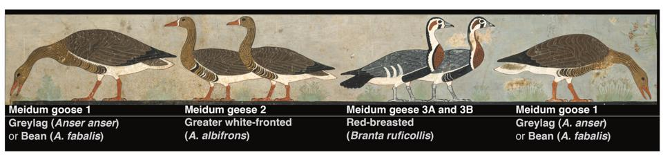 The Meidum Geese doi:10.1016/j.jasrep.2021.102834