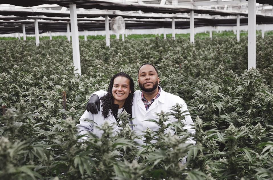 cannabis bay area vertically integrated black history month equity program