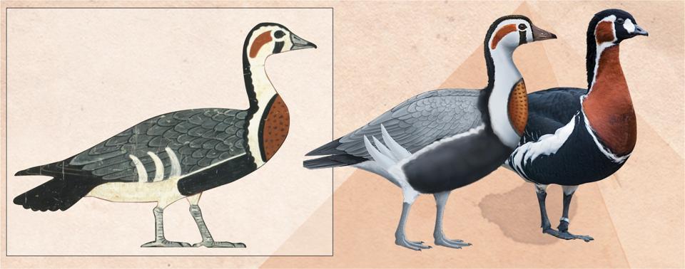 Meidum geese 3 (Credit: C.K. Wilkinson / Anthony Romilio / Tambako the Jaguar)
