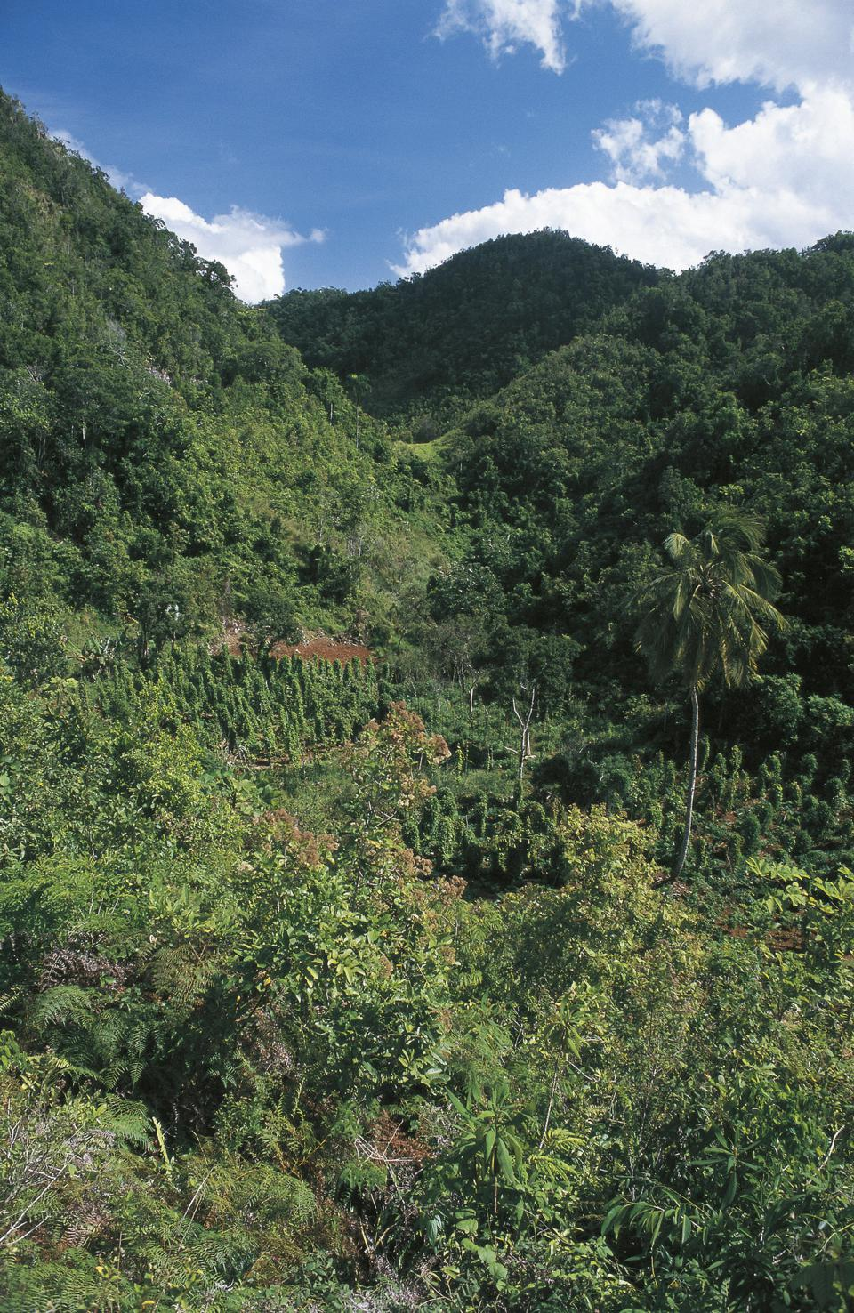 Jamaica, Cockpit Country plateau with tropical forest