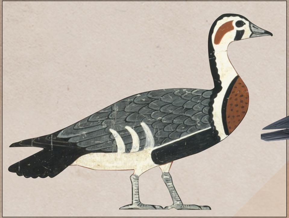 Meidum Geese (Detail) Tomb of Nefermaat and Itet. (Credit: Anthony Romilio)