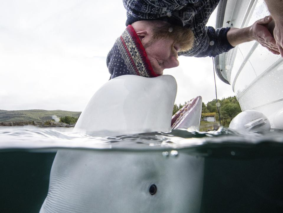 Sony Photo Competition: A man playing with a white whale