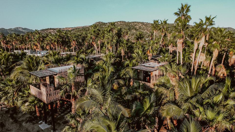 Acre Baja Resort sits on 25 acres of palm and farmland.