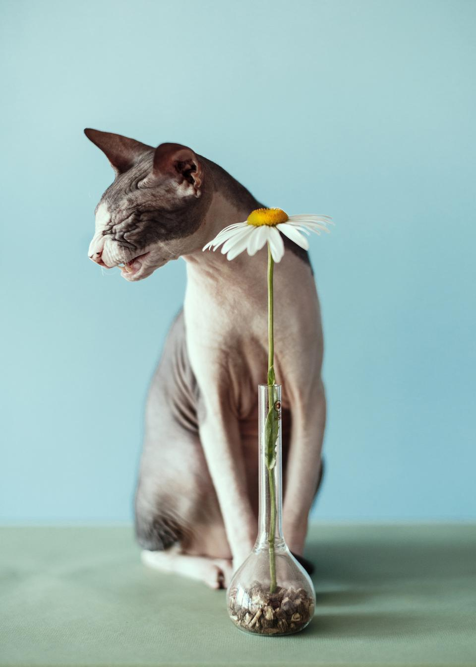 Sony World Photography Awards: still life of a cat  and a flower.