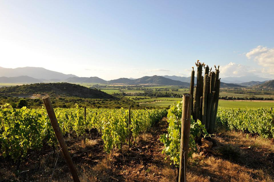 Vineyards, cactus and mountains