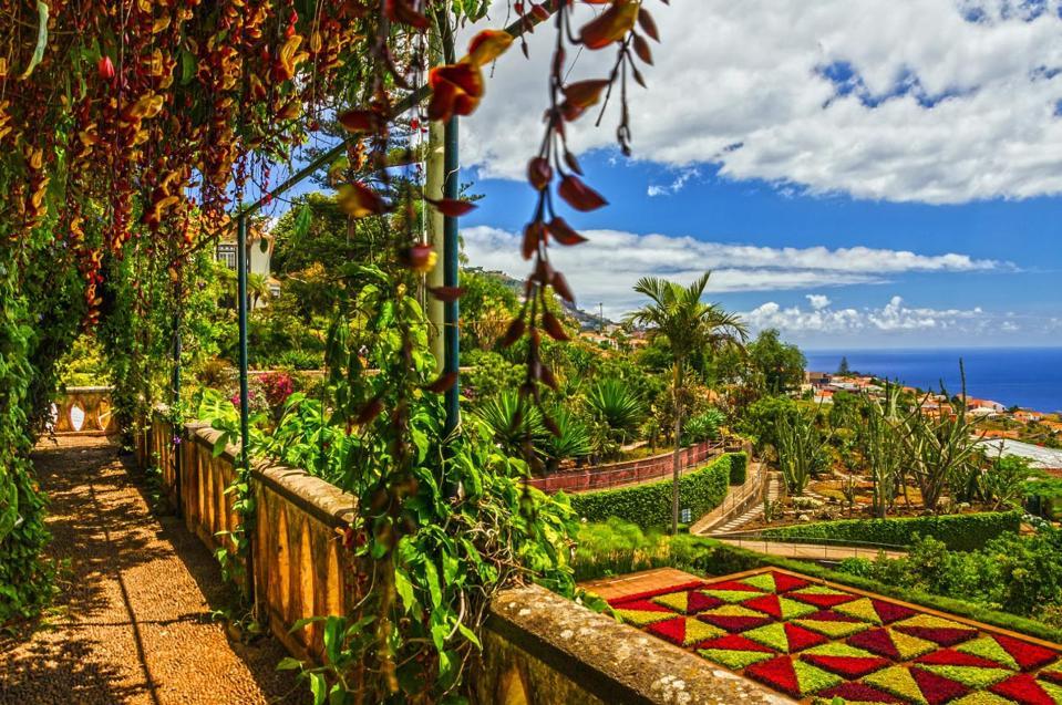 tropical vegetation in Madeira  Madeira Islands - Portugal