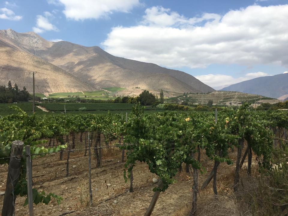 vineyards, mountains, blue sky
