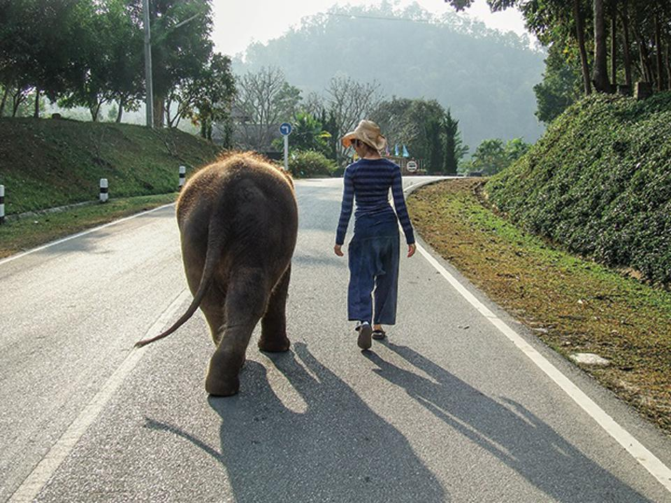 Dr. Gabby Wild with a baby elephant in Thailand