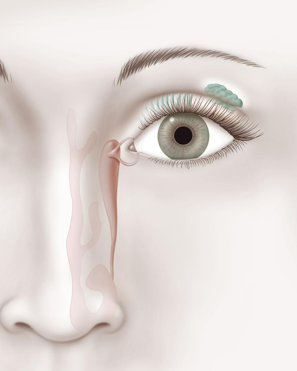 Illustration of tear duct and lacrimal gland
