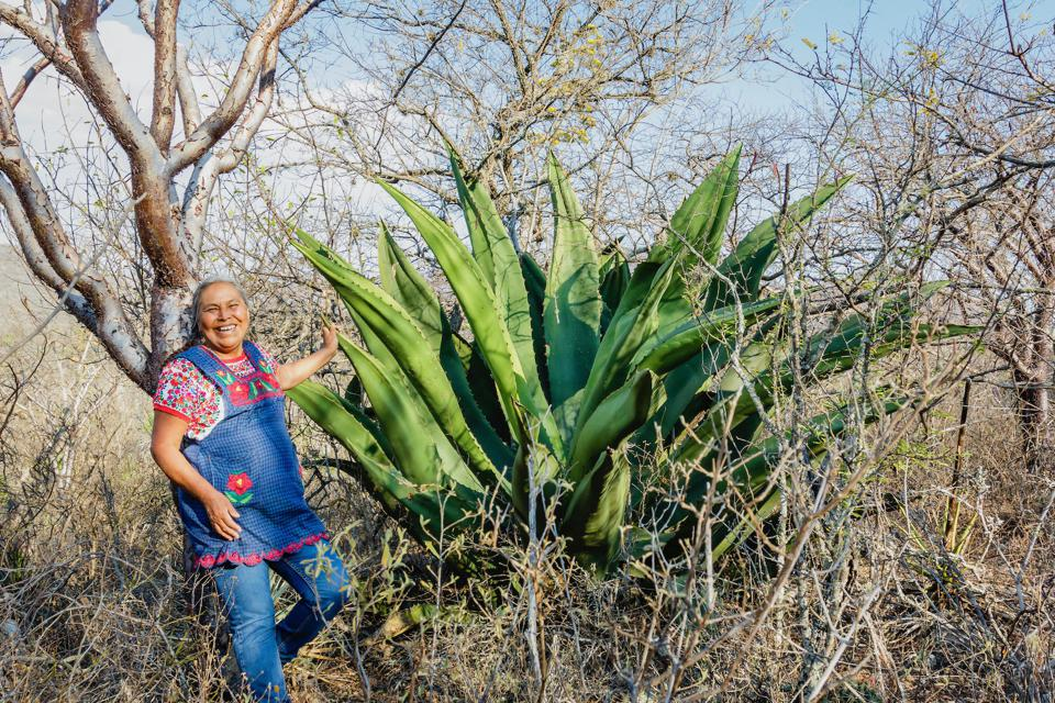 La productora de mezcal Berta Vázquez, junto a un preciado agave que se transformará en mezcal.  Vázquez vive en el valle central de Oaxaca, México.