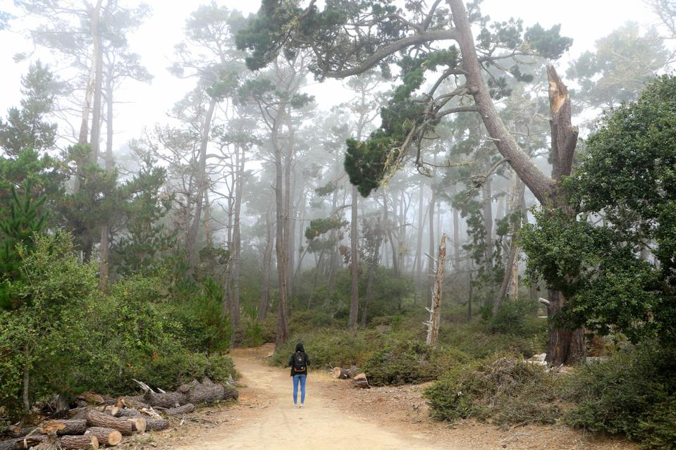 Hiking on a forest treail at Asilomar State Beach and Conference Grounds