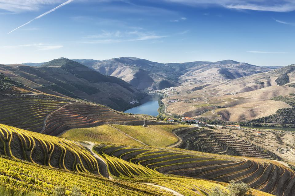 Douro Valley and vines, Portugal