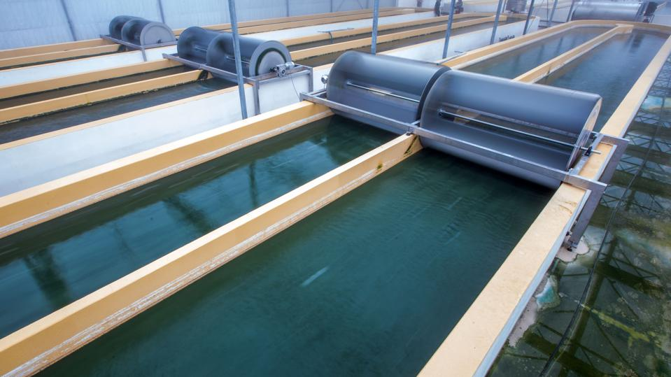 Algae cultivation to become industrial