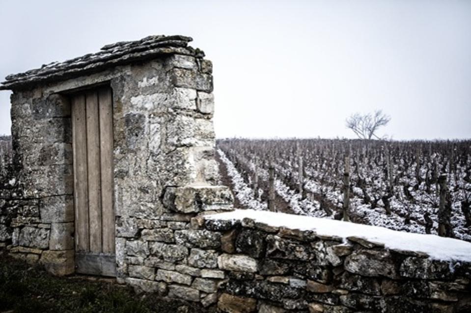 Burgundy Vineyard, France