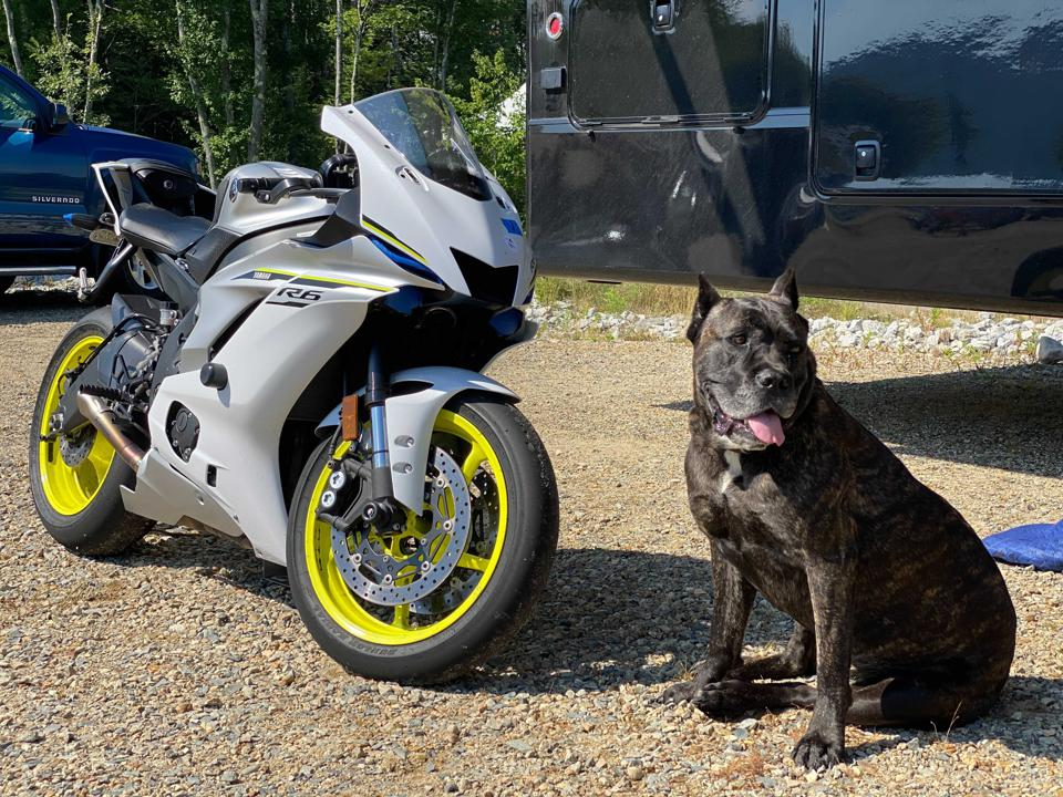 Motorcycle and Dog