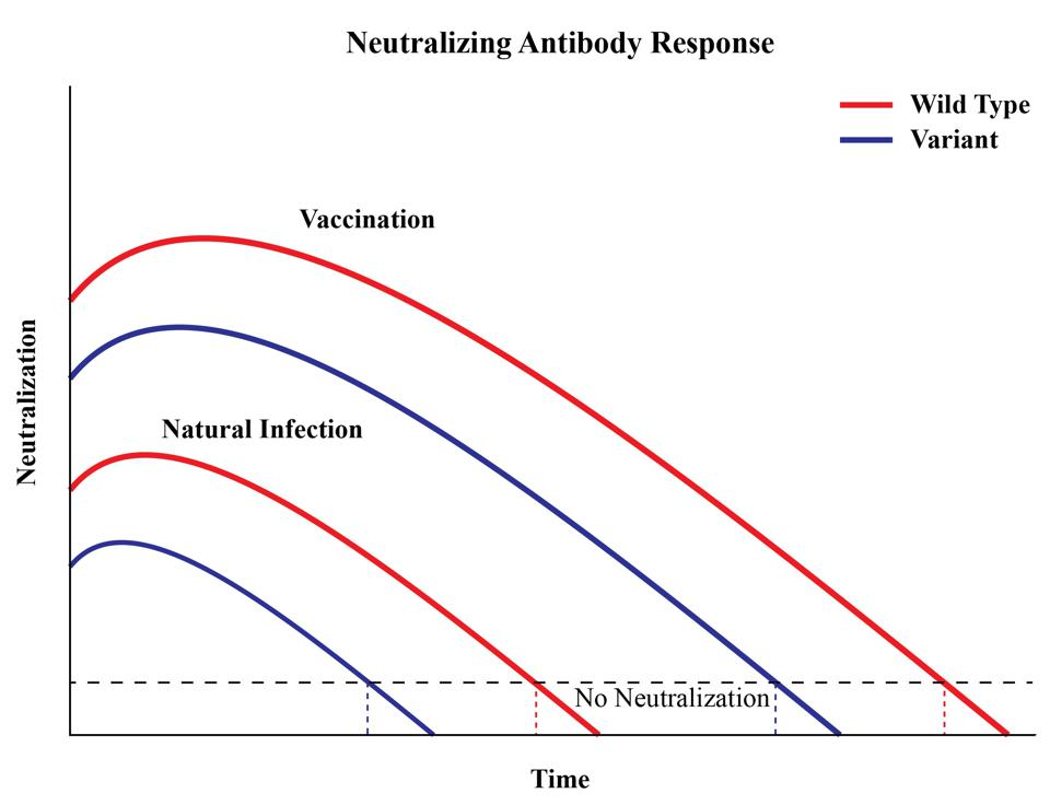 Figure 4. A representation of antibody titers over time.
