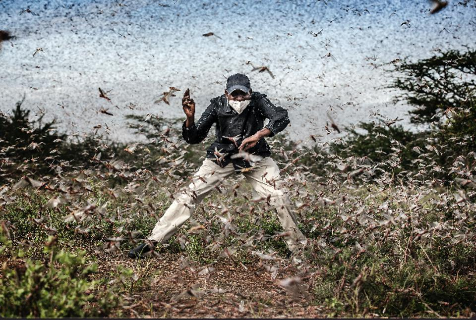 World Press Photo contest: a massive swarm of locusts ravaging East Africa