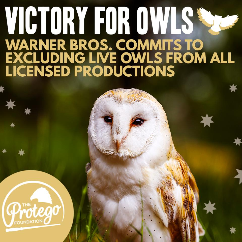 The Protego Foundation, a Harry Potter charity, posts about success following discussions with Warner Bros. about live owls being used in Harry Potter theme parks.