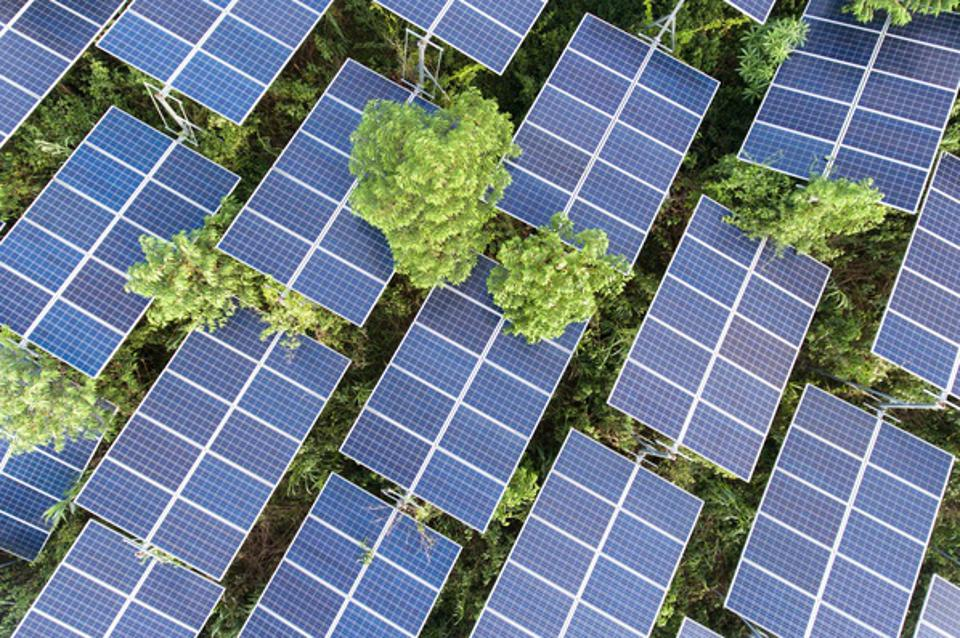 Aerial View Of Solar Panels On Tree