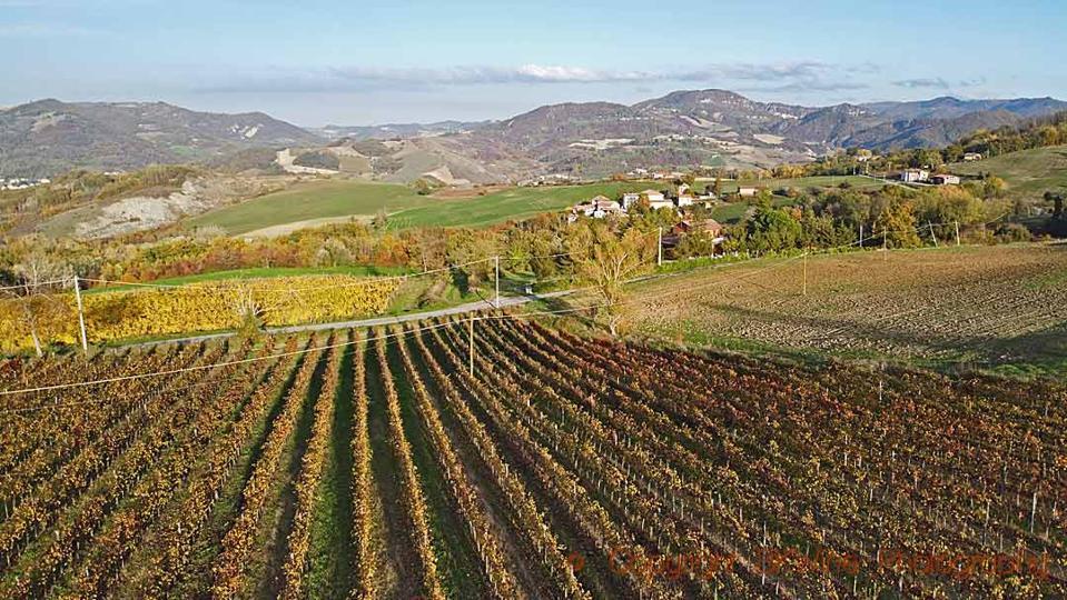 Timorasso vineyards at I Carpini in Colli Tortonesi