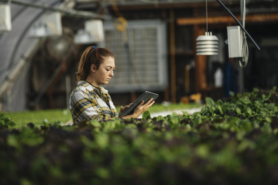 Female farm worker using digital tablet in greenhouse
