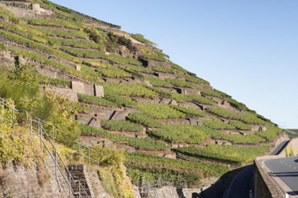 Vineyards at the Ahr river, Germany