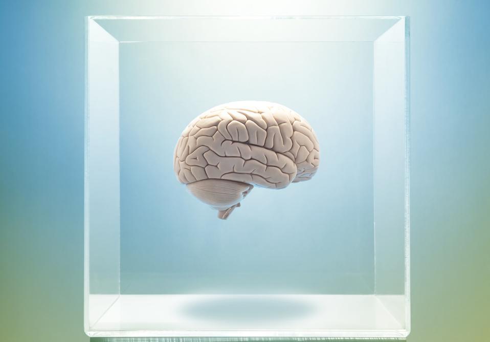 Brain in a clear box