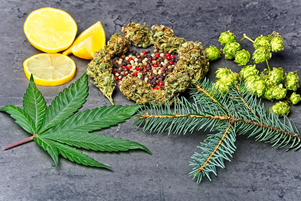 Cannabis bud and leaf with hoppy, pepper, lemon and fir needles.