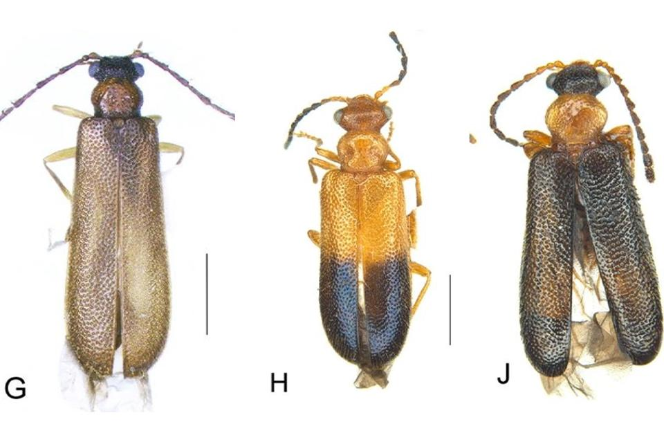 Color photo of three beetles on a white background