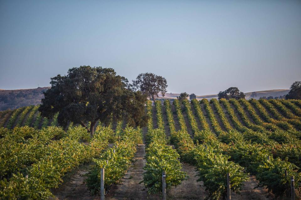 Penfolds vineyards in Camatta Hills, Paso Robles