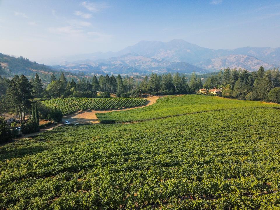 Penfolds' Napa Valley Diamond Mountain Vineyard