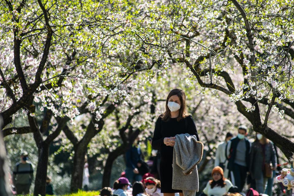 Spring blossom in Madrid as Europe struggles to cope with the third wave involving the B.1.1.7 variant of Covid-19
