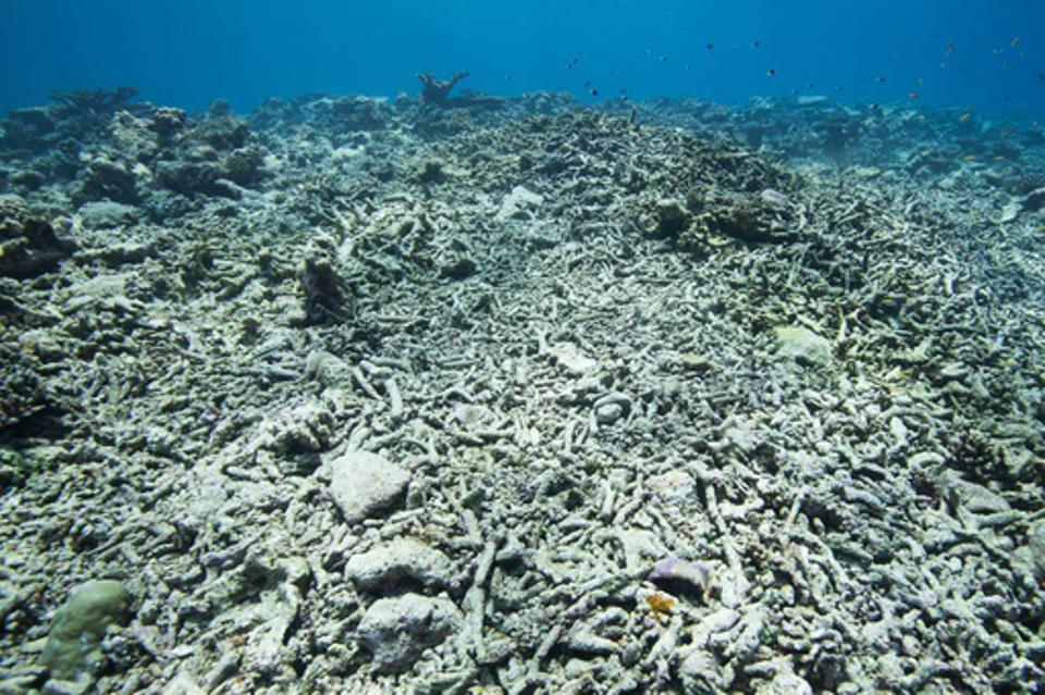 Bleached white and broken coral reefs in shallow water