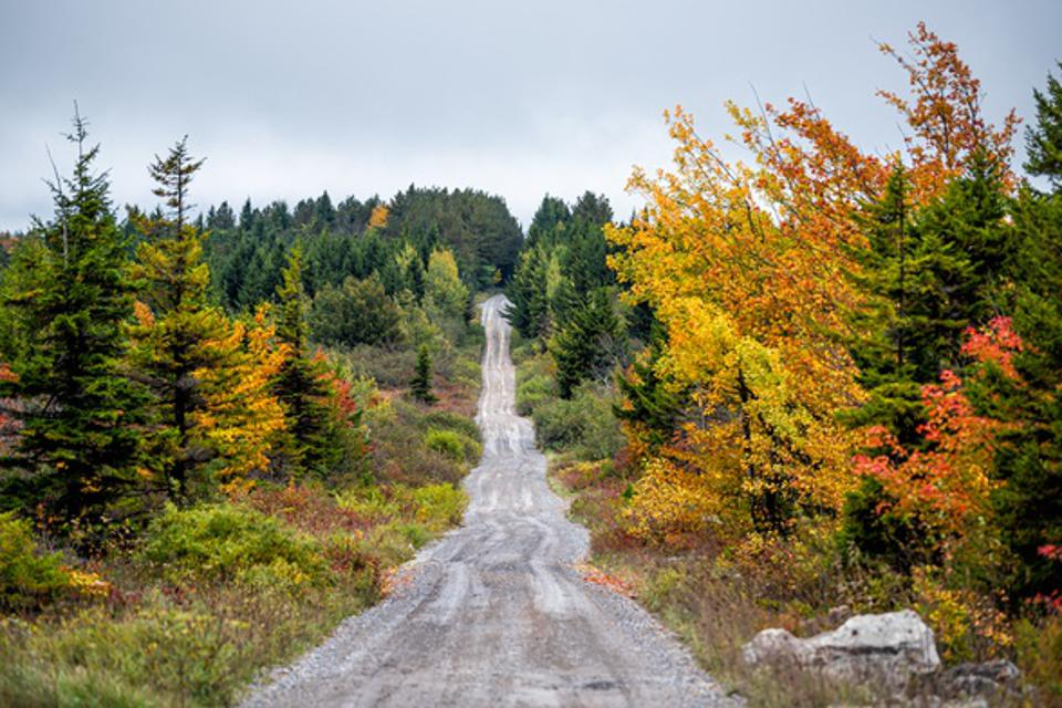 Colorful yellow foliage in autumn fall in Dolly Sods in West Virginia in National Forest Park with dirt road path straight driving point of view