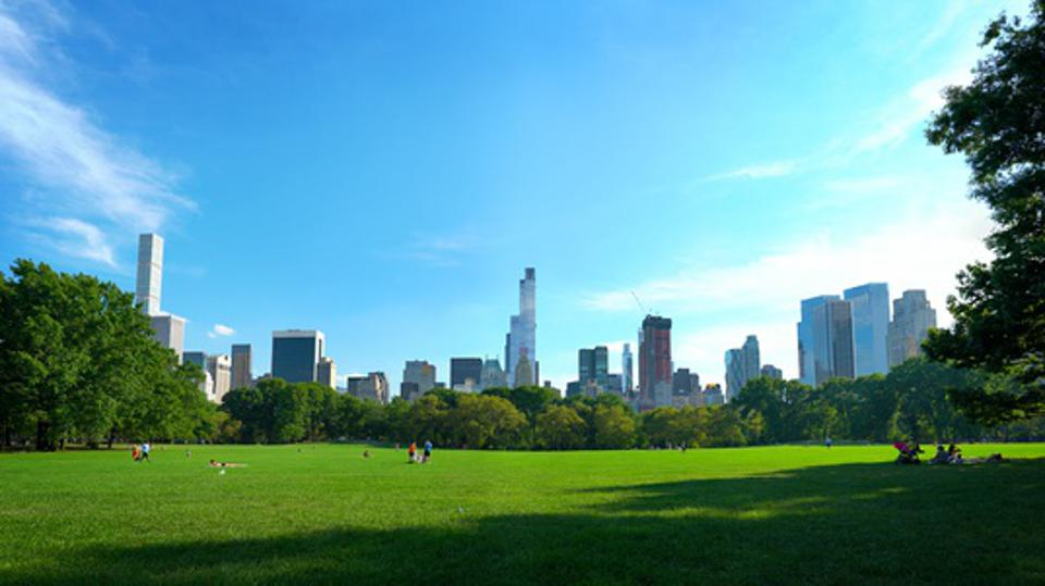 Calm in Central Park. New York