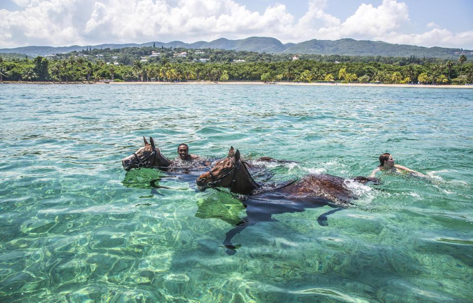 Swimming with horses submerged in the sea at Half Moon, Montego Bay