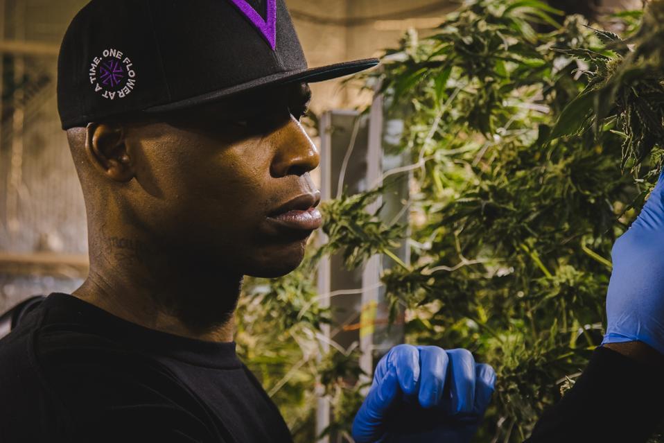 Al Harrington Cannabis Viola